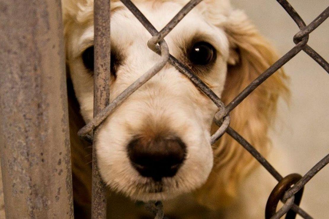 жестокое обращение с животными